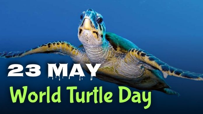 World Turtle Day 2020 - 23 May